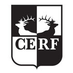 CERF Fellowship 2020-2022